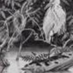 阿波野由起夫:京都市立芸術大学『小倉池/Ogura Pond』<br />700×530,額入サイズ915×715